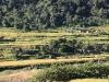 Rizières entre Tatopani et Darbang